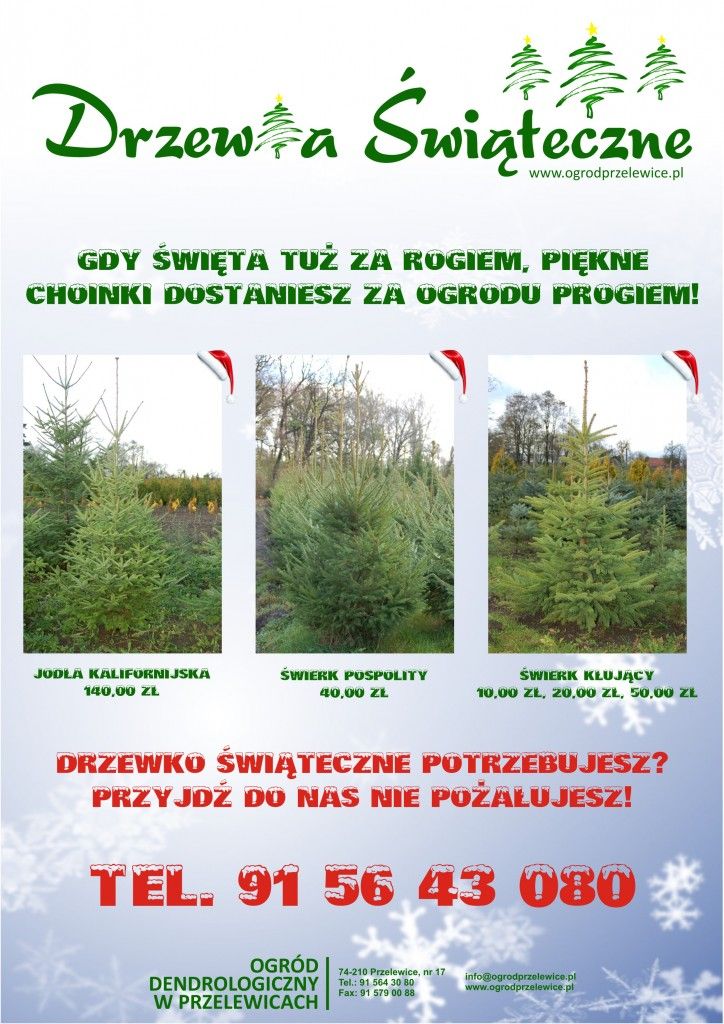 Drzewka Świąteczne z Przelewic